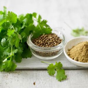 Coriander Seed-Shiv Export