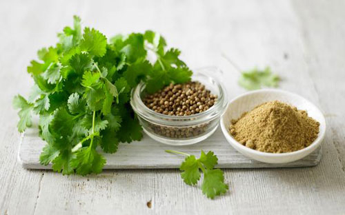 Coriander Seed-Shiv Export